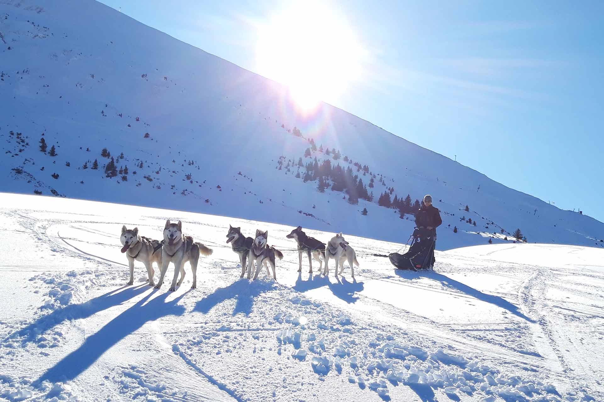 Schlittenhund - © Office de Tourisme de Manigod